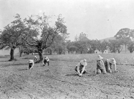 Family.LandArmy.FarmPlanting